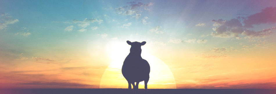 The-Lost-Sheep-Christian-Website-Banner